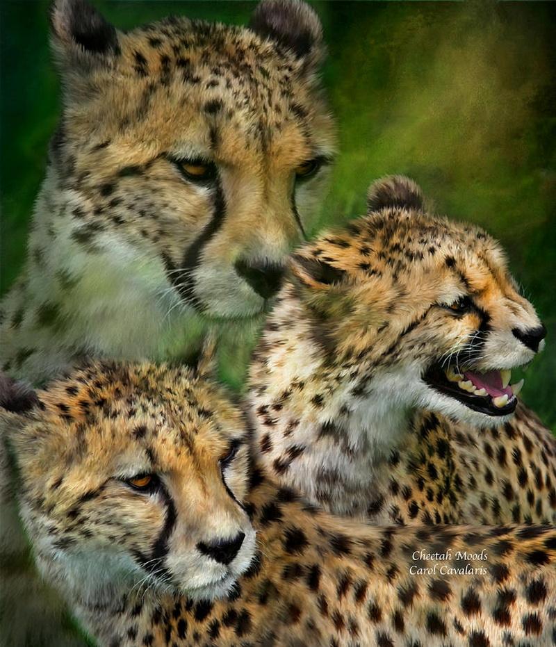 год тигра под знаком козерога