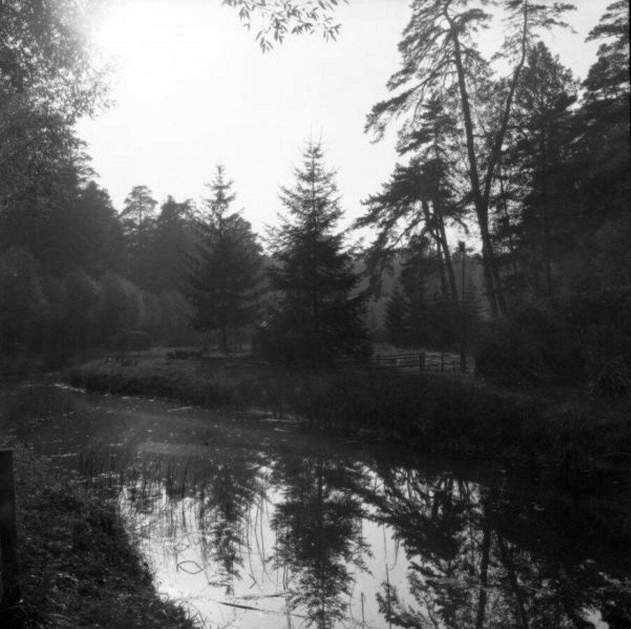 1904. Вид на пруд и лес. Путяево