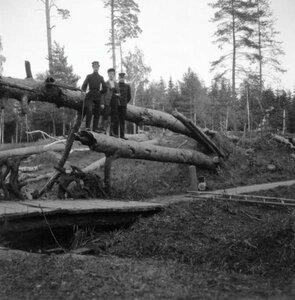 1904. Мотя, Гора и Миша стоят на поваленной сосне. Путяево