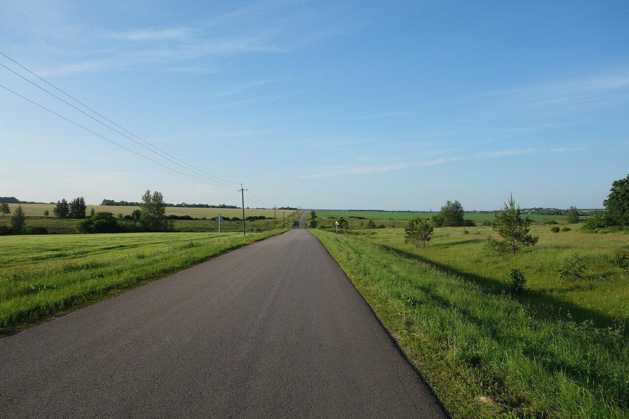 сосенки у пустой дороги