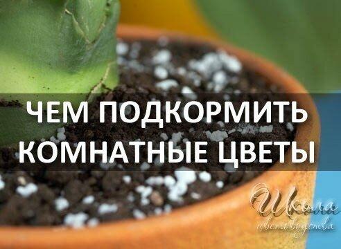 стирке касторка для комнатных растений как подкормка таких видов спорта