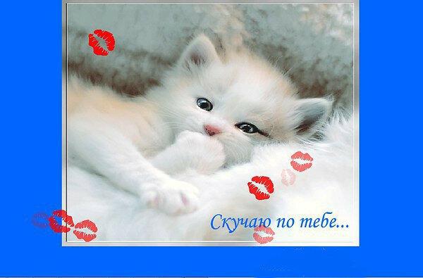 Скачать песню я по тебе скучаю милый котенок мой