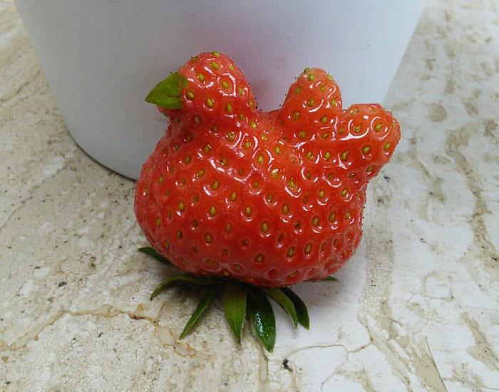 С яйцами у этой курицы не задалось, придется съесть.