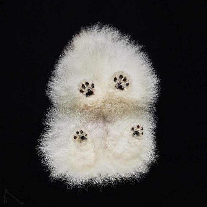 Черноглазый пес с удивлением взирает на камеру