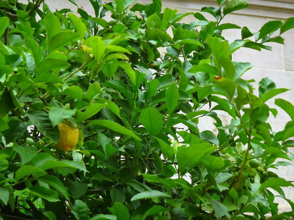 Luostari.22.6.2009-original (25).jpg