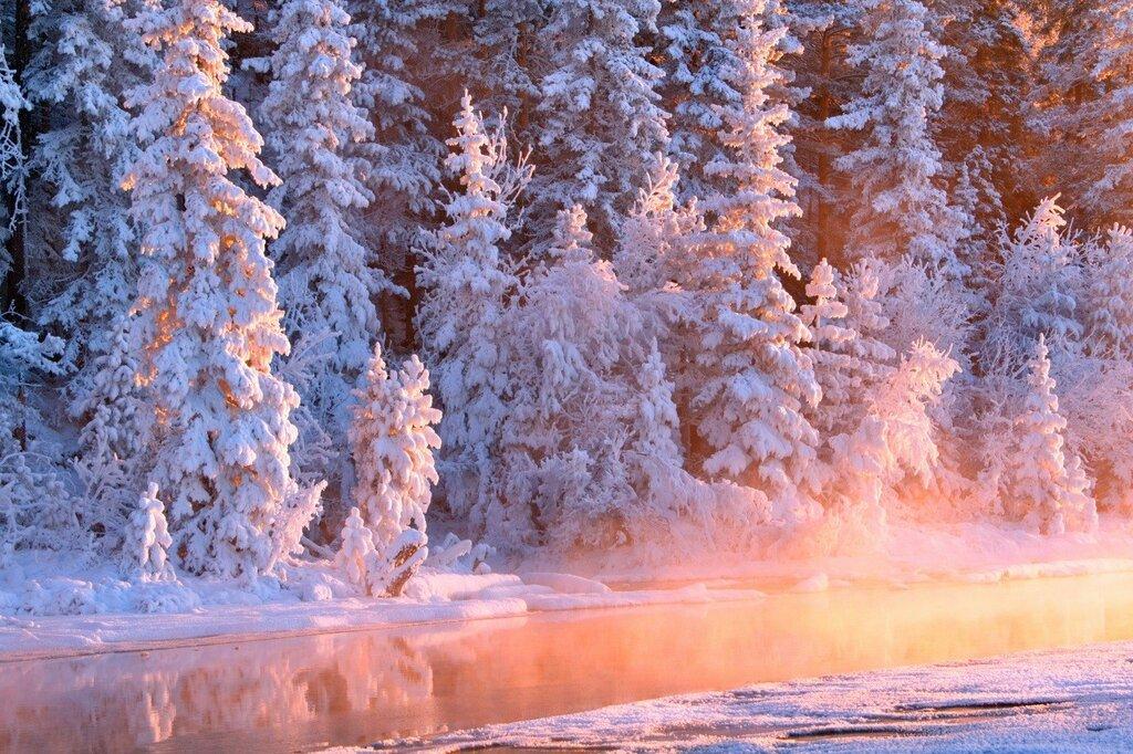 Winter_Forests_Fir_466657.jpg