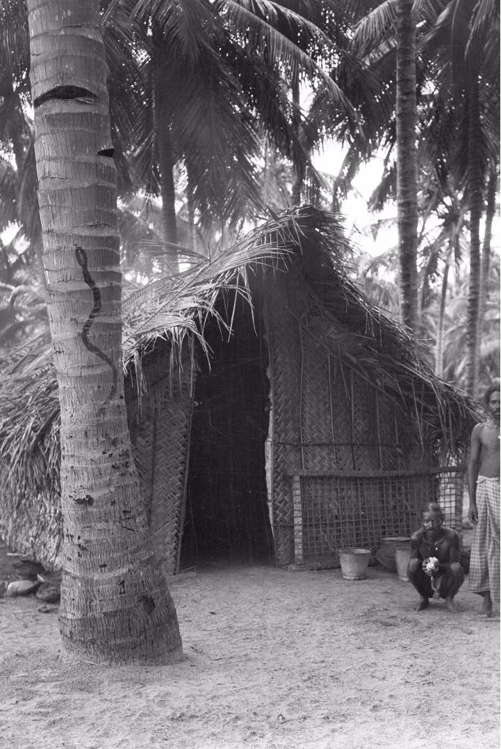 269. Калкуда. Нарисованная на пальме магическая черная змея рядом с домом рыбака