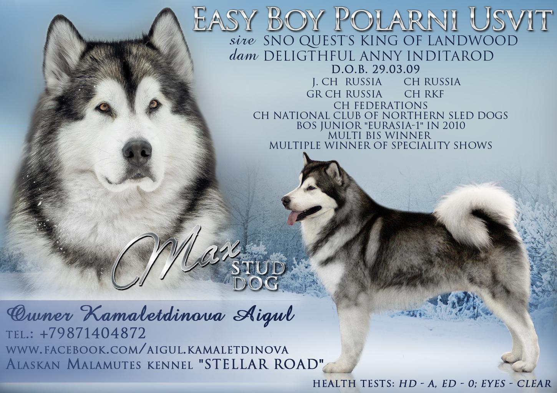Фото-коллажи, презентации собак, анонсы вязок 0_1e85b4_bfdaddd4_orig