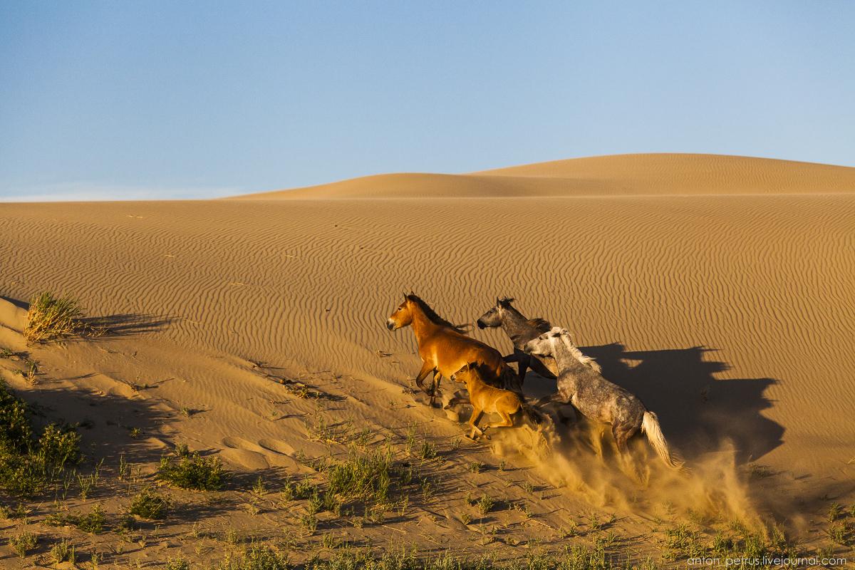Монголия 2016