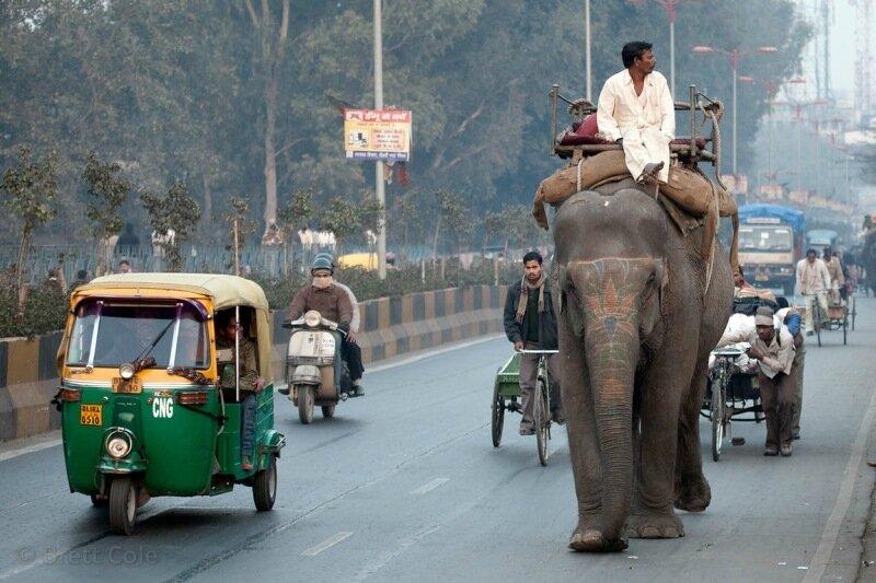 Слоны на улицах Нью Дели в Индии. Фотографии носатых гигантов
