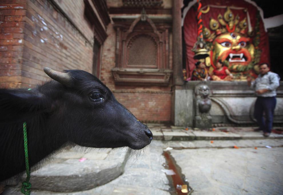 3. Фестиваль Мадхав Нараян, Непал, 9 января 2012. Ритуалы, исполняемые в течение этого праздник