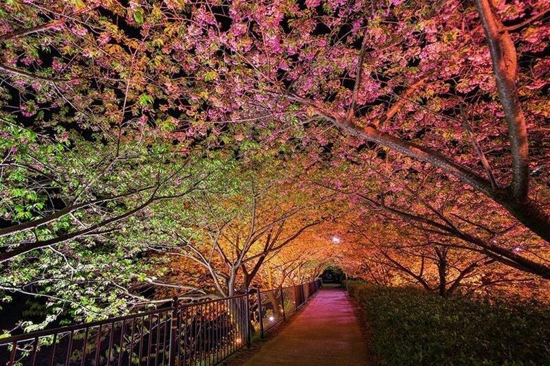 2. Япония. Кавадзу, Сидзуока. Туннель Любви. (Agustin Rafael Reyes)