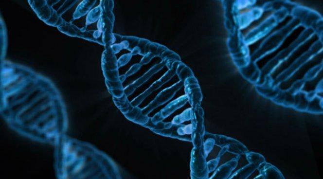 Ученые выявили неизвестные доэтого генные особенности аутизма