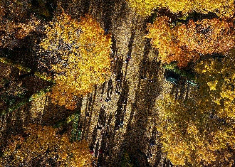 Опавшие листья в Летнем саду, старейшем парке Санкт-Петербурга. (Amos Chapple / Rex Features)