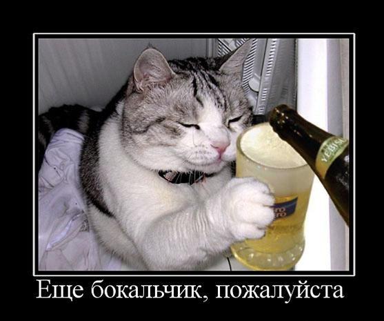 1277831587-kartinki-s-podpisjami-pro-kotje-60-foto_AddFun_ru_42.jpg