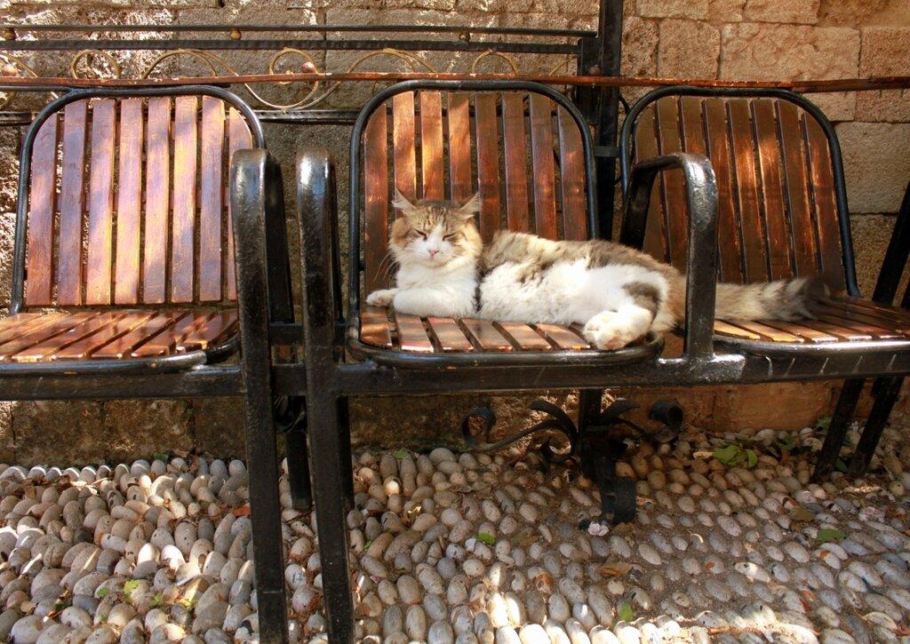 IMG_6873-Коты.jpg