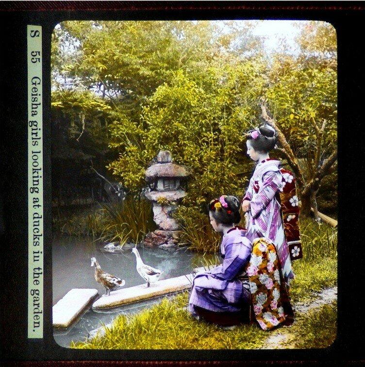 Майко смотрят на уток в пруду