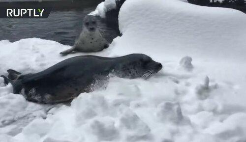 Звери играют в снегу после снегопада