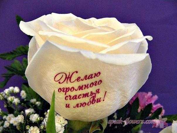 Желаю огромного счастья и любви!