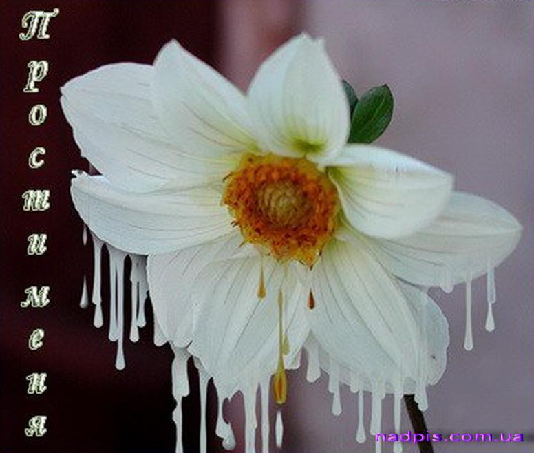 Прости меня! Цветок с сосульками открытки фото рисунки картинки поздравления