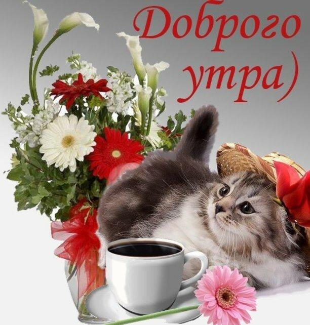С добрым утром фотки с животными