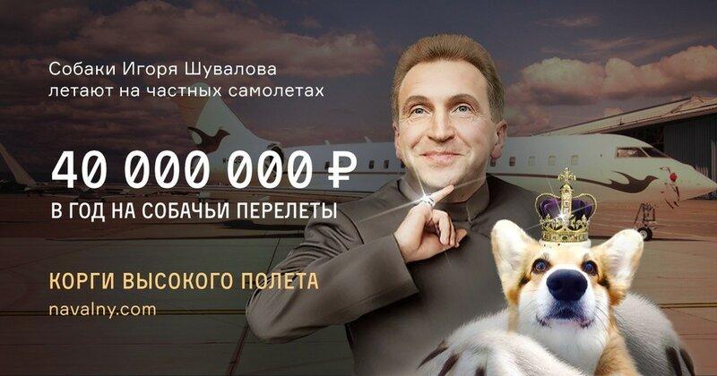 Собаки Шувалова