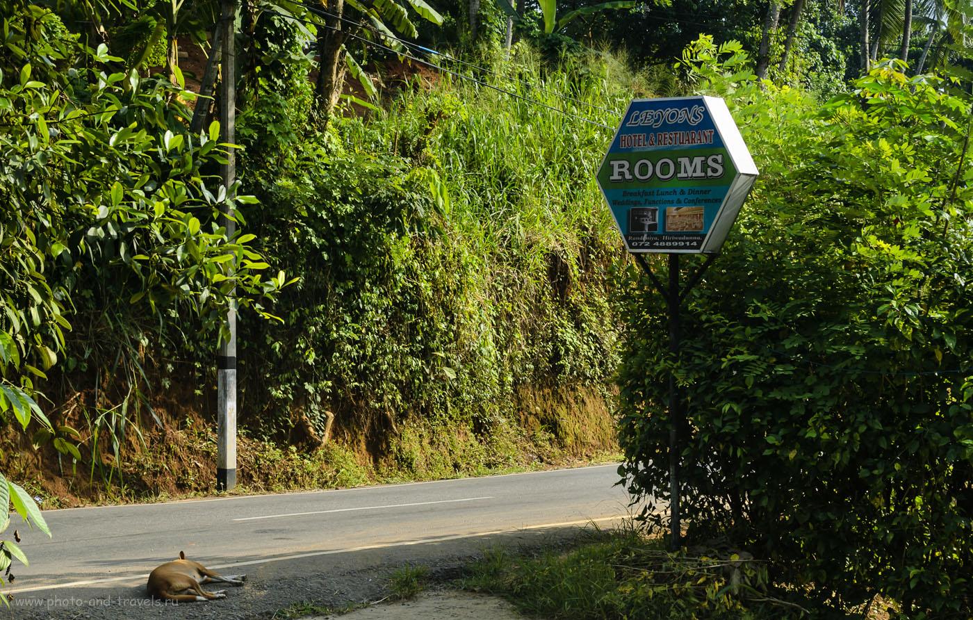 """Фото 3. Наш отель в трех километрах от приюта слонов """"Pinnawala Elephant Orphanage"""". Отзывы туристов об отдыхе на Шри-Ланке самостоятельно в мае. Отчет об экскурсии в питомник Пиннавела."""
