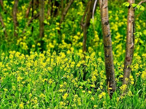 Ах, весенние цветочные поляны