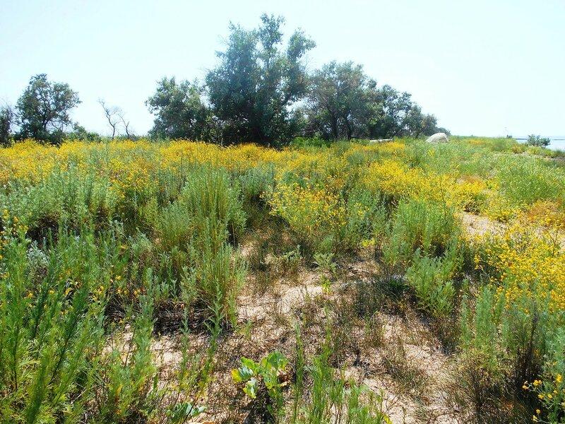 Обилие растительное на песках... DSCN6413.JPG