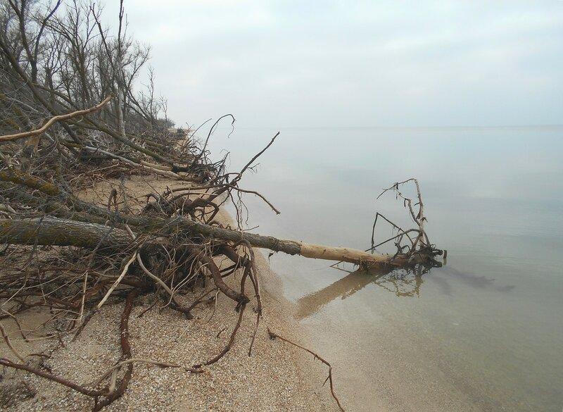 Корни в воде моря ... DSCN4298.JPG