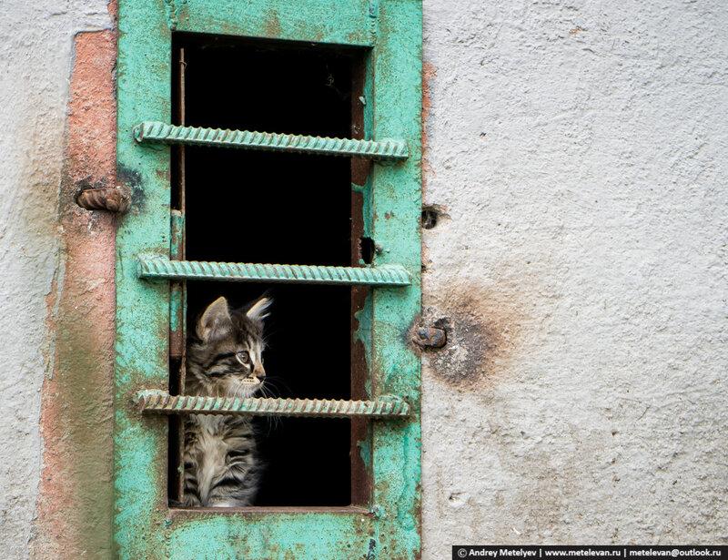 Свободный, дикий котенок живущий в подвале