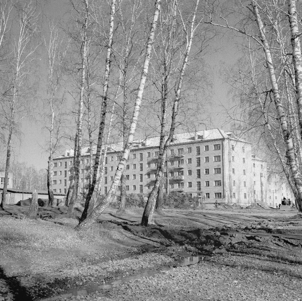 Красноярск. Вид сквозь березовую рощу на жилой дом