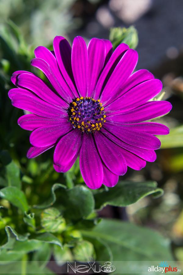 Я люблю все цветы, выпуск 219.