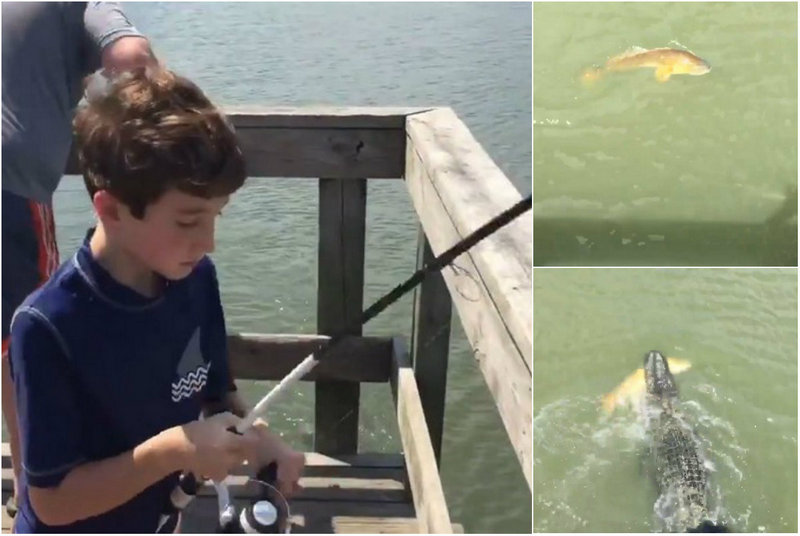Alligator stole a catch from a young fisherman
