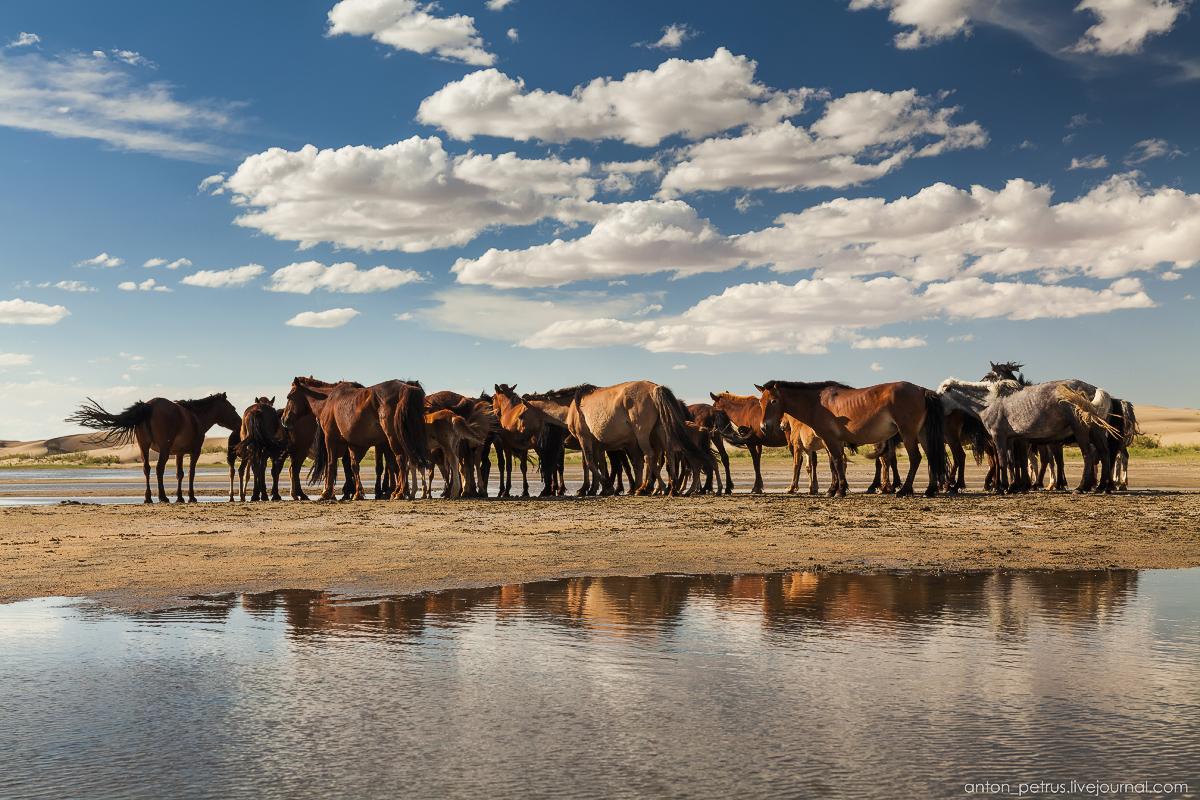 Дух свободы. Монголия
