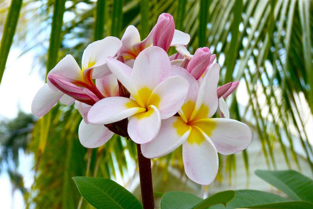 Цветы экзотика картинки