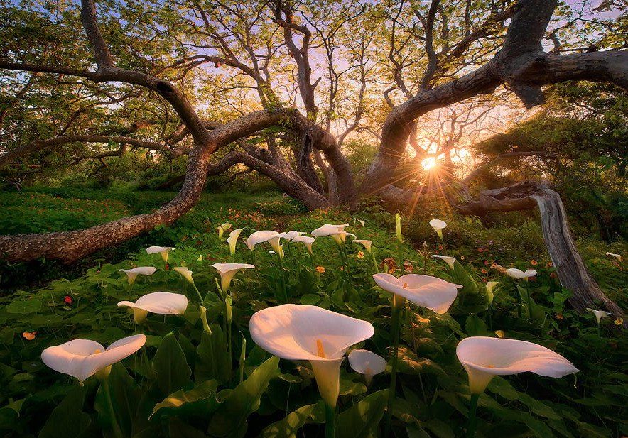 Рассвет в разных уголках планеты. Какой он? Фотограф Marc Adamus