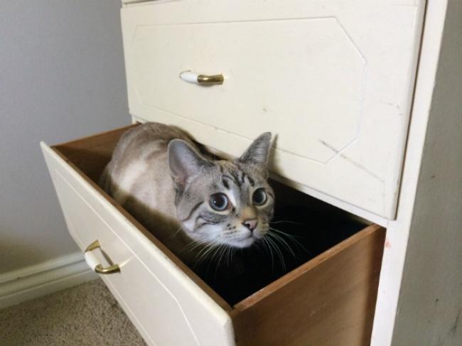 Отделение специально для кошек