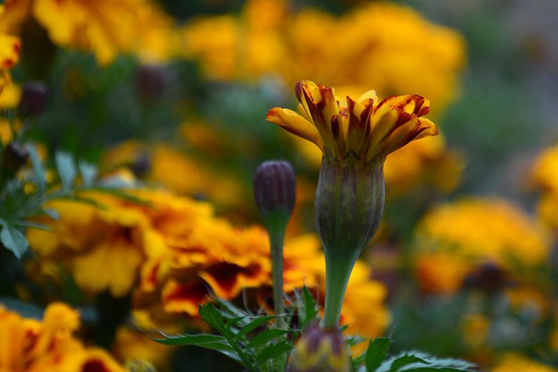 цветы дождливый день 4.jpg