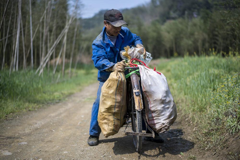 Бамбуковый бизнес Китая