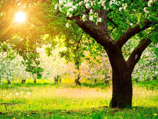 Солнечная картинка