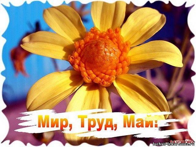 Открытка! 1 Мая! С праздником Весны и труда!  Желтый цветок открытки фото рисунки картинки поздравления