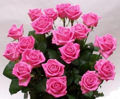 Открытки. С днем социального работника. Букет красивых розовых роз открытки фото рисунки картинки поздравления
