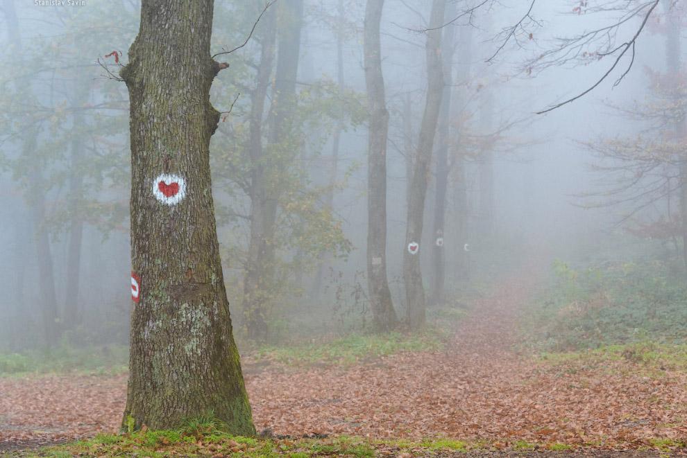 Национальный парк Фрушка-гора 5. Столь плотный туман по сути — облака, покрывающие в это время