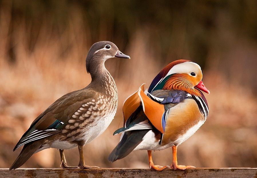 Животные и птицы Robert Adamec