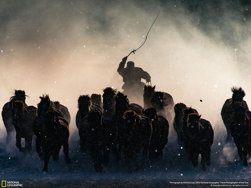 Обладатель Гран-при конкурса — снимок Энтони Лау «Зимний погонщик» (Winter Horseman), а также лучшая