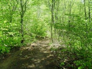 На лесной дороге, солнечно ... SAM_6916.JPG