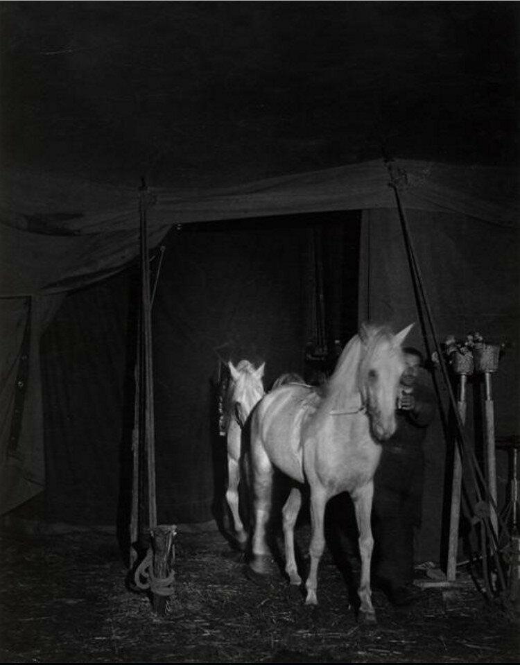 1937. Цирковые лошади