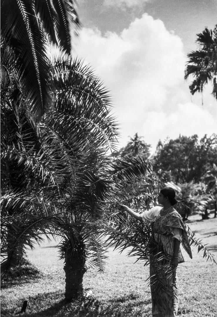 435. Женщина возле пальмы
