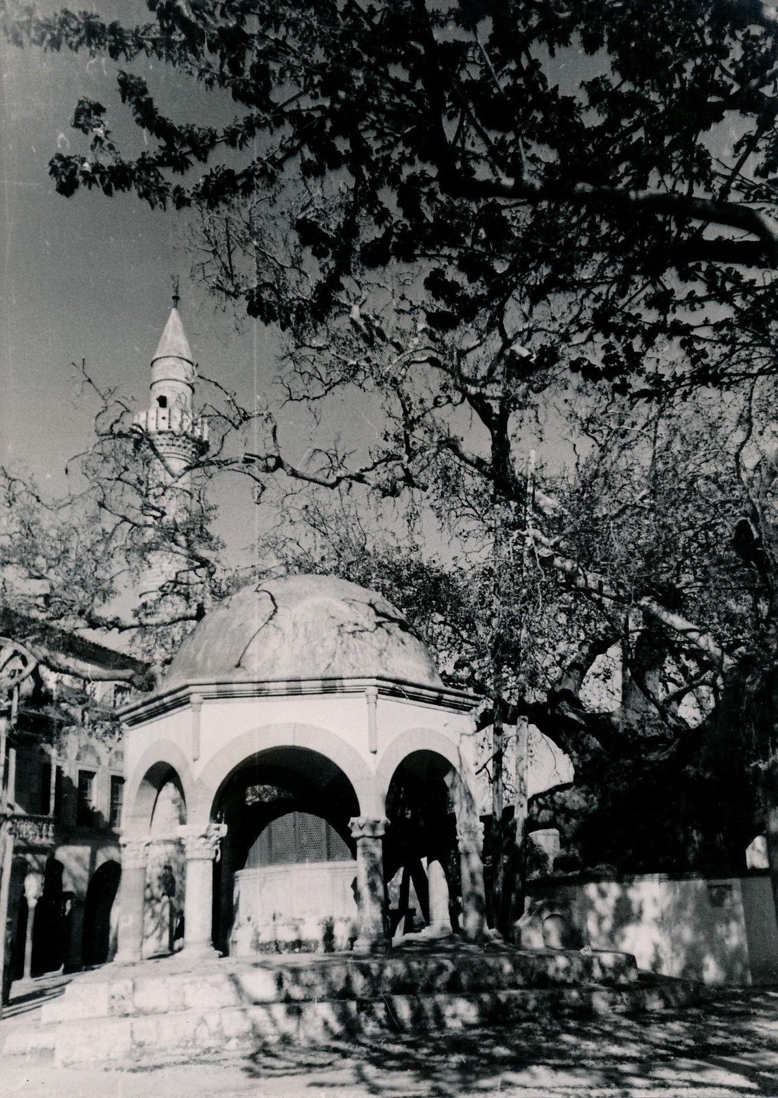 1935. Кос. «Платан Гиппократа»